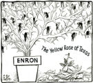 Enron: The Yellow Rose of Texas