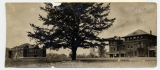 Campus Views, 1914 -- The Lonesome Pine